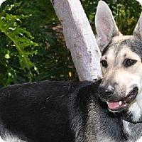 Adopt A Pet :: Pebbles - Newport Beach, CA