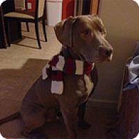 Adopt A Pet :: BudBud - Wilmington, MA
