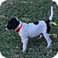Adopt A Pet :: HENRY - EDEN PRAIRIE, MN