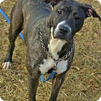 Adopt A Pet :: Veronica - Piqua, OH