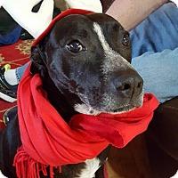 Adopt A Pet :: Karma - Reduced Fee! - Spring Valley, NY