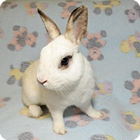Adopt A Pet :: Jamie - Chesterfield, MO