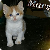 Adopt A Pet :: Mars - Great Mills, MD
