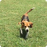 Adopt A Pet :: Amazing Grace - San Antonio, TX