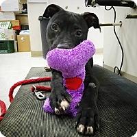 Adopt A Pet :: Theo - Elyria, OH