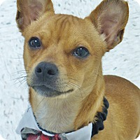 Adopt A Pet :: Chip - Chambersburg, PA