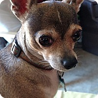 Adopt A Pet :: Bruno - San Diego, CA
