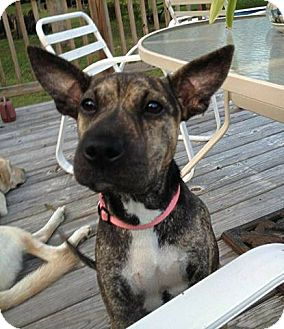Terrier (Unknown Type, Medium) Mix Dog for adoption in Mobile, Alabama - Jill