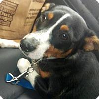 Adopt A Pet :: Perry - Columbus, OH