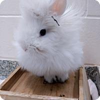 Adopt A Pet :: PADME - Boston, MA