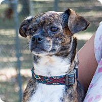 Adopt A Pet :: Bren - Daleville, AL