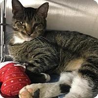 Adopt A Pet :: Garth - Voorhees, NJ