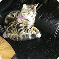 Adopt A Pet :: Nils - Acushnet, MA