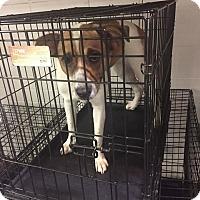 Adopt A Pet :: Firefly - Newport, KY