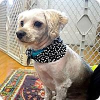 Adopt A Pet :: Prince - Marietta, GA