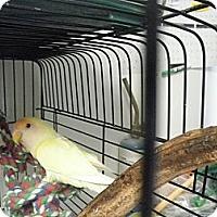 Adopt A Pet :: Ginger & Momar - Neenah, WI