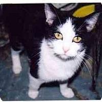 Adopt A Pet :: Darla - cincinnati, OH