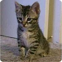 Adopt A Pet :: Chelo - Davis, CA