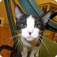 Adopt A Pet :: Danny - Medina, OH