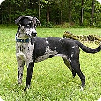 Adopt A Pet :: Charade - Mocksville, NC