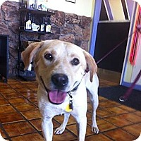 Adopt A Pet :: BJ - Scottsdale, AZ