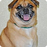 Adopt A Pet :: Hogan - Port Washington, NY