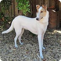 Adopt A Pet :: Salt - San Diego, CA
