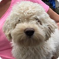 Adopt A Pet :: Clyde - Orlando, FL