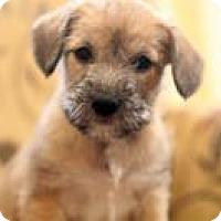 Adopt A Pet :: Dessa - Minneapolis, MN