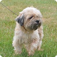 Adopt A Pet :: Monte - Tumwater, WA