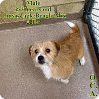 Adopt A Pet :: 1-1 Chewy - Triadelphia, WV