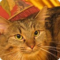 Adopt A Pet :: Vivette - St. Louis, MO