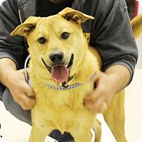Adopt A Pet :: Turner-Prison Dog - Elyria, OH