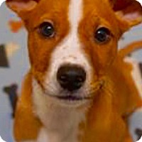 Adopt A Pet :: Wyatt - Barnegat, NJ