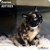 Adopt A Pet :: OCARINA - Conroe, TX