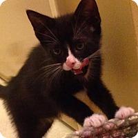 Adopt A Pet :: Stevie - Gainesville, FL