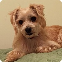 Adopt A Pet :: Dorie-adoption pending - Schaumburg, IL
