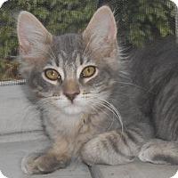 Adopt A Pet :: Birley - North Highlands, CA