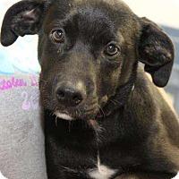 Adopt A Pet :: Sophie - Sudbury, MA