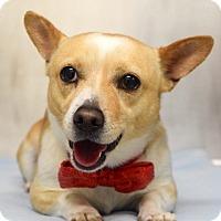 Adopt A Pet :: Cornelius - Dublin, CA