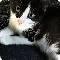 Adopt A Pet :: Hannah - N. Billerica, MA