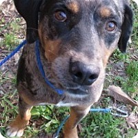 Adopt A Pet :: S926 Tango - Bay Springs, MS