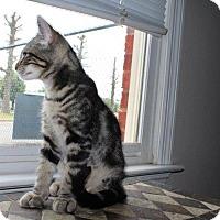 Adopt A Pet :: Tobi - Homewood, AL