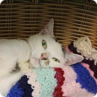 Adopt A Pet :: Lilac - Indianapolis, IN