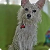 Adopt A Pet :: Cecilia - San Diego, CA