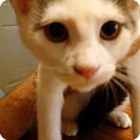Adopt A Pet :: Ryder - Columbus, OH