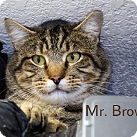 Adopt A Pet :: Mr. Brown - Hamilton, MT