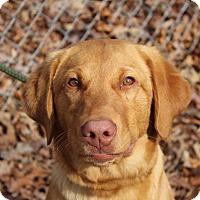 Adopt A Pet :: Murphy - Washington, DC