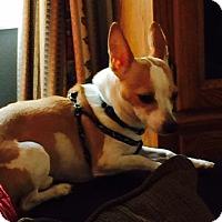 Adopt A Pet :: Benny - Beavercreek, OH