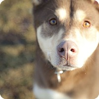 Adopt A Pet :: King - Harvard, IL